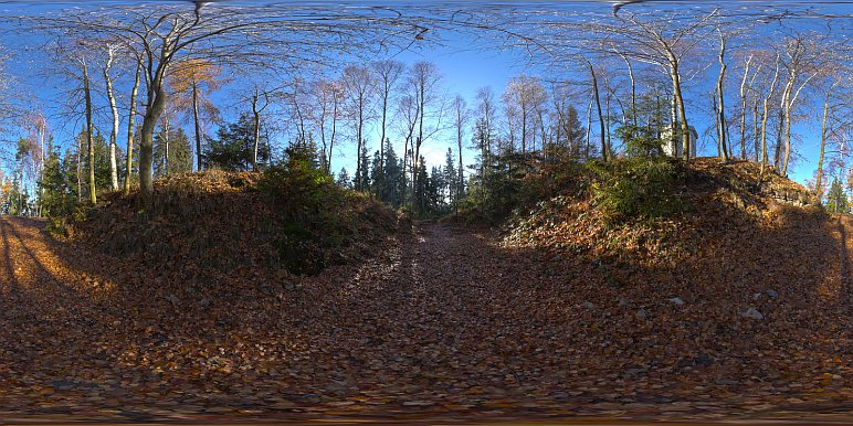11-13_forest_d
